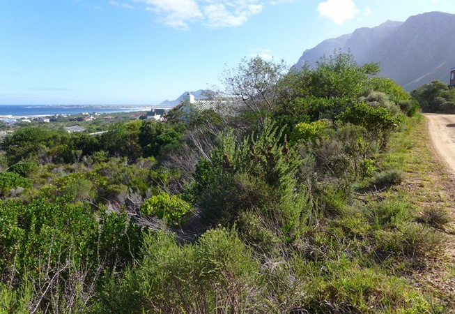 businesses for sale western cape home up ingcarshq